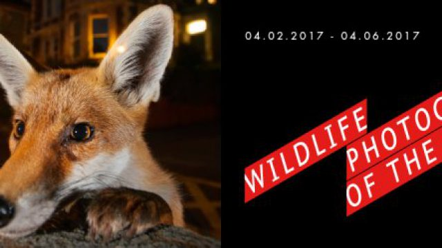 Wildlife Photographer of the Year, dal 4 febbraio