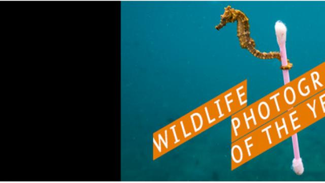 Wildlife Photographer of the Year 53 – 16 febbraio 10 giugno 2018