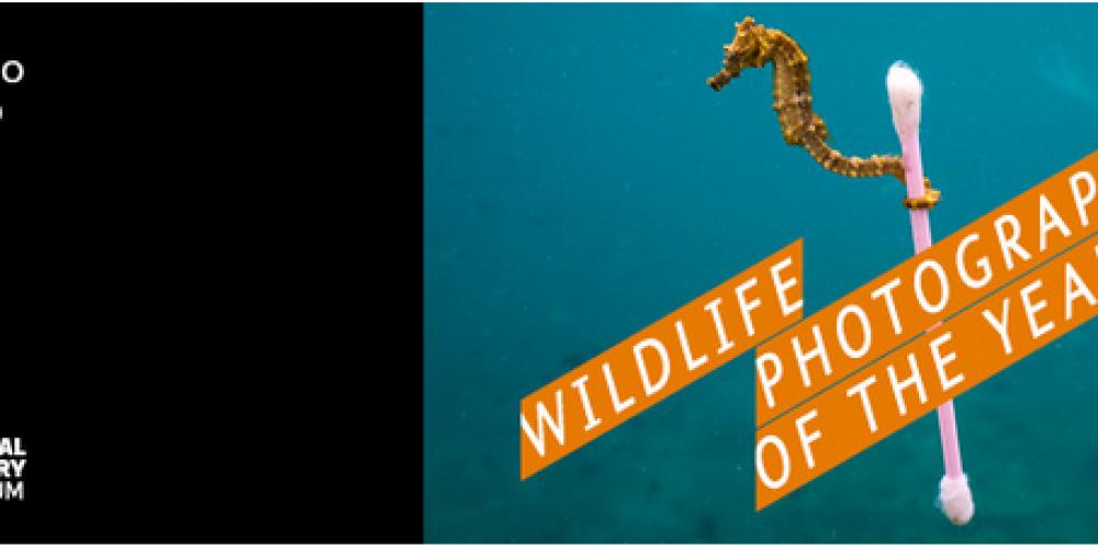 https://lamaisondesvignerons.it/wp-content/uploads/2018/01/wildlife-photo-2018.png